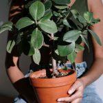 Was Sie überZitrusbäumewissen sollten