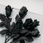 Die Eigenschaften der schwarzen Rosen