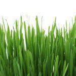 carex irish green ist das I-Tüpfelchen im Garten